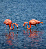Bonaire Tours and Activities
