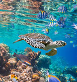 Maldives Tours and Activities