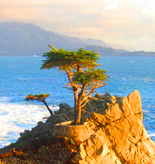 Monterey Tours and Activities