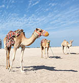 Qatar Tours and Activities