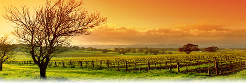 Sonoma Tours and Activities