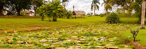 Suriname Tours and Activities
